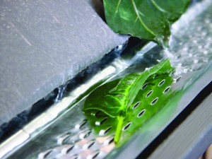 Gutter Protection Springfield MO